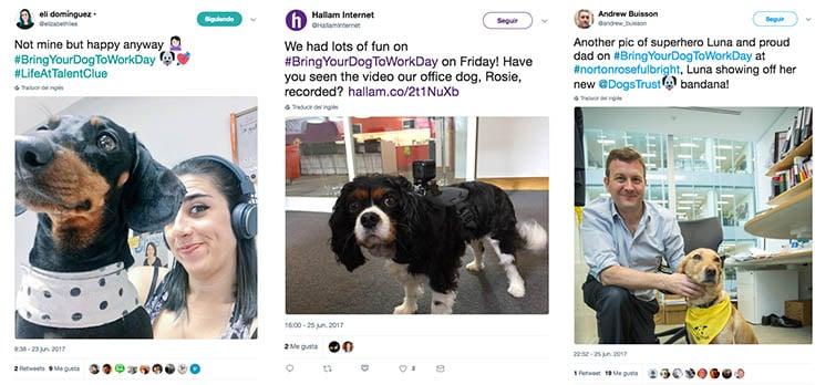 perros oficina twitter