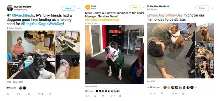 perros oficina ejemplo