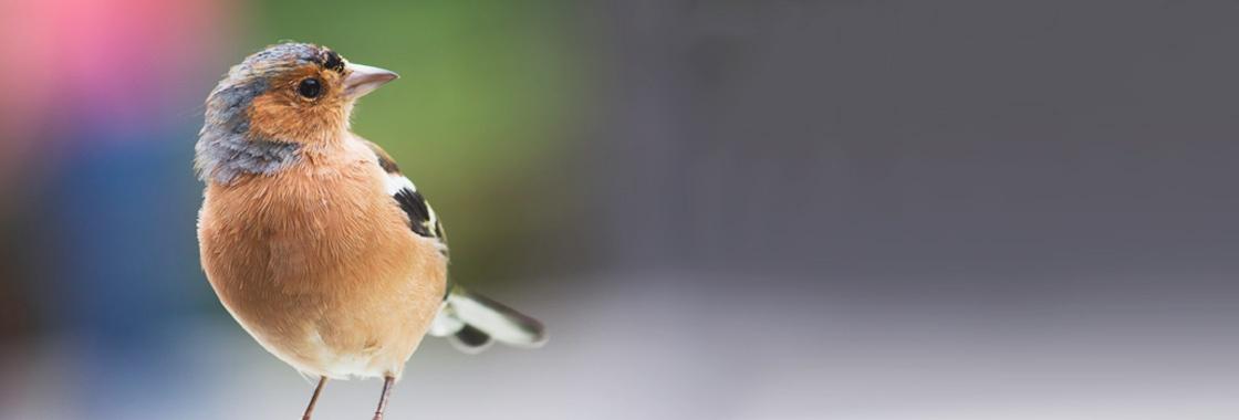 Publicar Ofertas de Empleo en Twitter: Un MUST del Reclutamiento