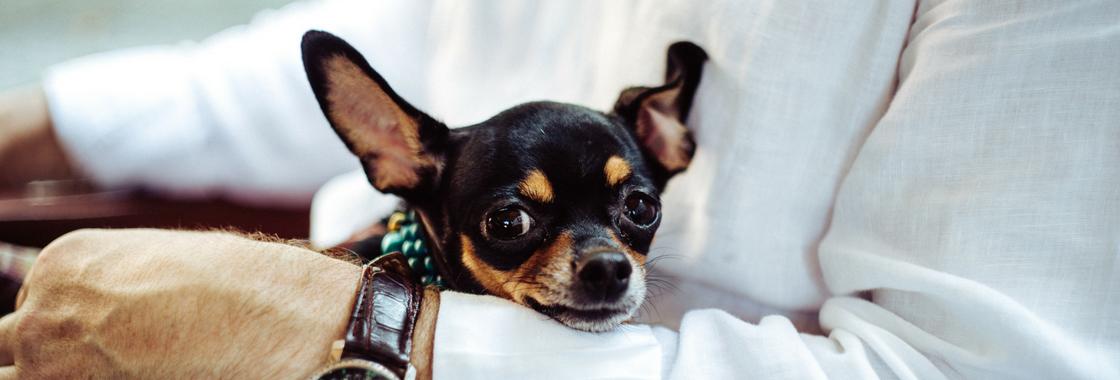 5 beneficios de permitir a tus empleados llevar a su perro al lugar de trabajo